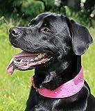 Lederhalsband Elena Buffalo Leder Halsband Rosa Pink Strass BREIT Mittel - Große Hunde Mädchen Halsband S M L XL Tysons Breeches (XL )