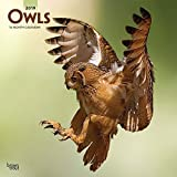 Owls - Eulen 2019 - 18-Monatskalender (Wall-Kalender)