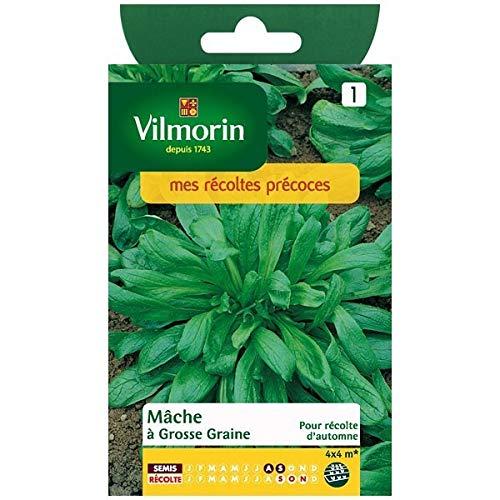 Vilmorin - Sachet graines Mâche à grosse graine