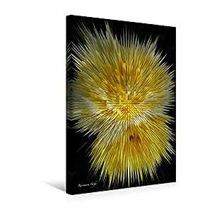 Premium Textil-Leinwand 30 cm x 45 cm hoch, Flower Explosion I PHOTO ART° by Rosemarie Hofer   Wandbild, Bild auf Keilrahmen, Fertigbild auf echter Leinwand, Leinwanddruck (CALVENDO Kunst)