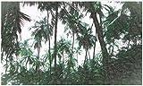 BHXINGMU Wandbild Benutzerdefinierte Wandbild Fototapete Tropische Pflanzen Kunst Tapete Schlafzimmer Wanddekoration 150Cm(H)×200Cm(W)