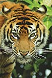 The Sumatran Tiger Journal: 150 page lined notebook/diary
