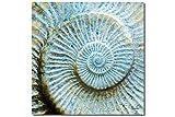 Unendlichkeit - Künstlermotiv, XXL Bild / Wandbild, Größe: 80 x 80 cm Quadrat, Digital-Druck auf Art Canvas Leinwand, Keilrahmen 2 cm. Muschel Schnecke Versteinerung Fossil blau gelb Bild groß Kunst