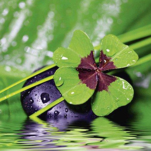 Artland Qualitätsbilder I Glasbilder Deko Glas Bilder 30 x 30 cm Wellness Zen Pflanze Foto Grün A6FD Glücksklee. Entspann mal wieder