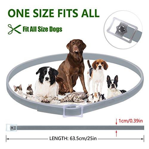 Zoom IMG-3 cane collare antipulci pulci e