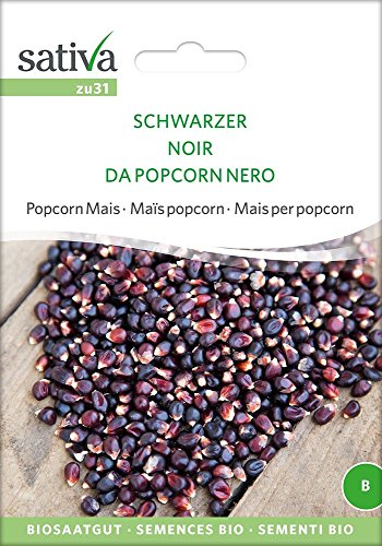 Popcorn Mais Schwarzer   Bio-Maissamen