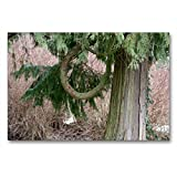 Premium Textil-Leinwand 90 x 60 cm Quer-Format Natur pur | Wandbild, HD-Bild auf Keilrahmen, Fertigbild auf hochwertigem Vlies, Leinwanddruck von Angelika Keller