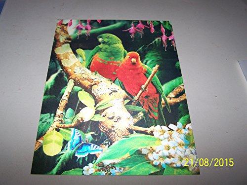 Pappagalli 2 su un ramo Quadro in 3D, A forma di pappagalli lenticolare 3D Ready To Frame Wall Art, 34,5 x 24,5 cm - Parrot Wall Plaque