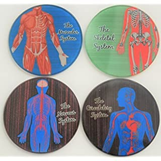 Anatomy Medical Glass Coasters (All four Systems)