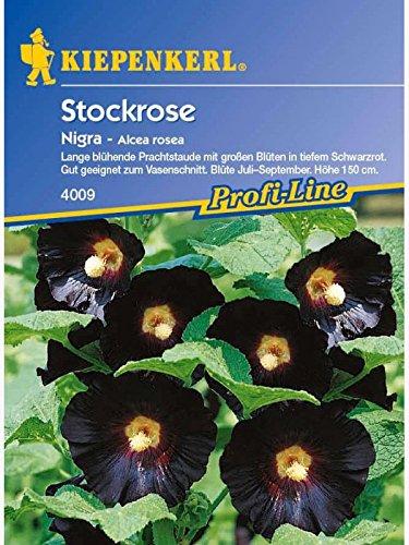 Alcea ficifolia Stockrosen Stockmalve Nigra schwarzrot