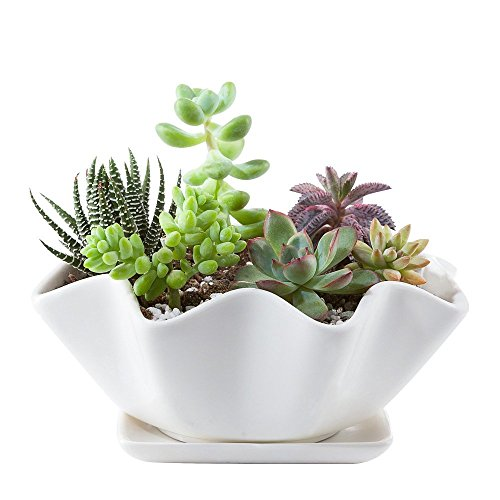 Used, Mkouo Ceramic Succulent Plant Pot/Cactus Plant Pot/Flower for sale  Delivered anywhere in Ireland