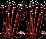 STAR-LINE® 12 Bambusfackeln Gartenfackel 90cm Mahagoni-Farben mit Docht & Tank Bambusfackel Gartendekoration Fackel Gartenfackeln Hochzeit Dekoration Öllampen