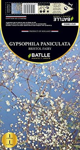 semillas-batlle-075110-bulbo-gypsophila-bristol-fairy
