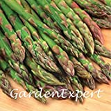 100pcs Jersey-Riese Spargelsamen Grüner Spargel Bio Heirloom Gemüsesamen Bonsai-Hausgarten-Topfpflanze DIY