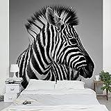 Vliestapete–Zebra Baby Portrait II–Wandbild quadratisch