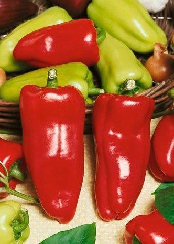 Tropica - Paprika / Chilli - Gypsy (Capsicum annum) - 10 Samen - Ungarischer Paprika