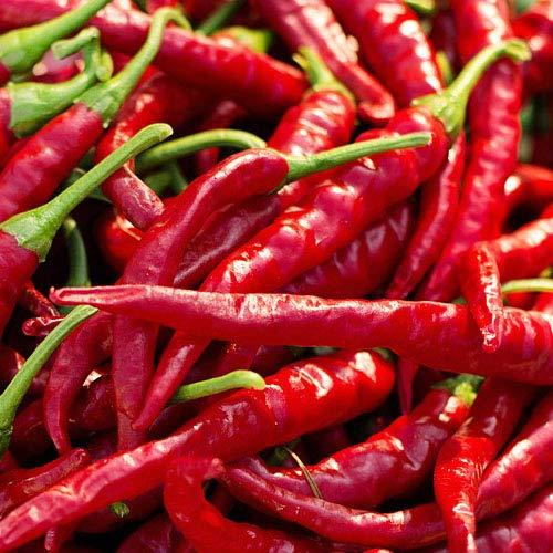 Chili Cayenne - 25 Samen aus Portugal in 100% Naturqualität - scharf pikant - Massenträger Klassiker der modernen Küche