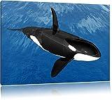 schöner Orca im Meer schwarz/weiß Format: 100x70 auf Leinwand, XXL riesige Bilder fertig gerahmt mit Keilrahmen, Kunstdruck auf Wandbild mit Rahmen, günstiger als Gemälde oder Ölbild, kein Poster oder Plakat