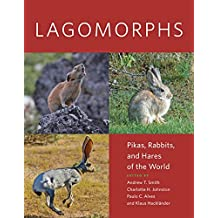 Lagomorphs