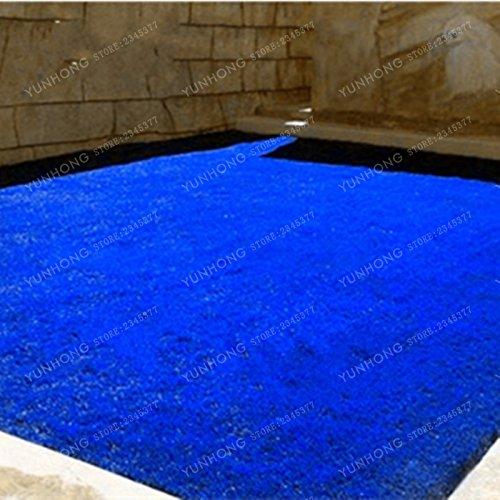 500 Pcs Rare Blue Grass Seed Graines à gazon Fleurs vivaces Jardin Terrains de soccer Villa Haute GradeOutdoor Graine de plantes 6