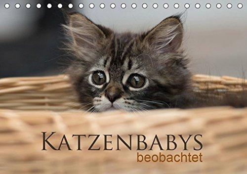 Katzenbabys beobachtet (Tischkalender 2019 DIN A5 quer): Dreizehn zauberhafte Bilder der süßen Katzenbabys. Mit der Kamera beobachtet, machen sie viel (Monatskalender, 14 Seiten) (CALVENDO Tiere)