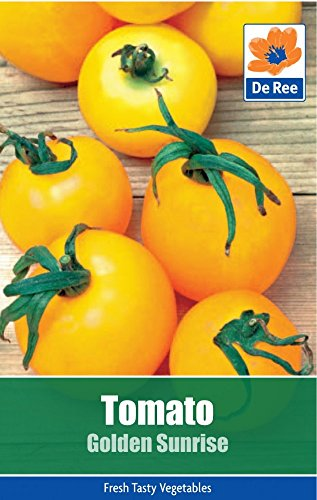 2-packs-of-tomato-golden-sunrise-seeds-approximately-75-seeds-per-pack-150-in-total