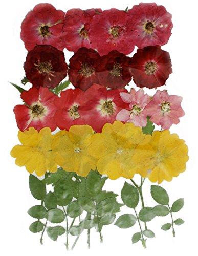 Gepresste Blumen, Rosen , Rittersporn , Nachtkerze , Laub