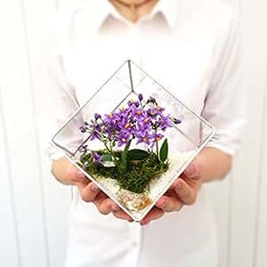 LoveGlass Grand terrarium en verre géométrique pour jardinage intérieur Fait main, Verre, Argent, 19x20x20
