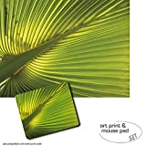Set Regalo: 1 Póster Impresión Artística (80x60 cm) + 1 Alfombrilla Para Ratón (23x19 cm) - Palmas, Hoja De Palmera De Cáñamo