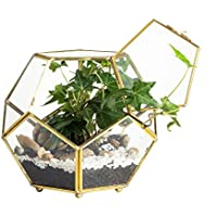 Close Footed oro cobre latón forma de pelota de terrario de cristal con puerta Pentágono cerca de Helechos y musgo carnosas maceta caja de pantalla (6.89x 6.89x 5,9pulgadas