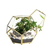 Close Footed Gold Copper Brass Glass Geometric Terrarium with Door Pentagon Ball Shape Close Fern Moss Succulent Planter Display Pot Box 6.89 x 6.89 x 5.9inches
