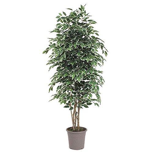 ficus-artiticiale-variegato-con-tronco-vero-h200-cm-l-70cm