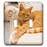 3D Rose LSP_236171_2 Happy Orange Tabby