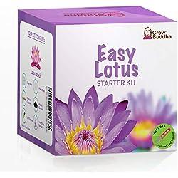 Züchte dein eigenes Bonsai Lotusblume Kit an - Züchte Sie ganz einfach Lotuspflanzen mit unserem Anfängerfreundlichen Lotus-Samen-Kit - Einzigartiges Geschenk
