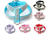 Gorgeous Strass Diamante Dog Pet Puppy Harness für xsmall & kleine Hunde aus kommt mit kostenlosen besonderen Hund oder Knochen Charme (Large fits chest 37-45cm, Blau)