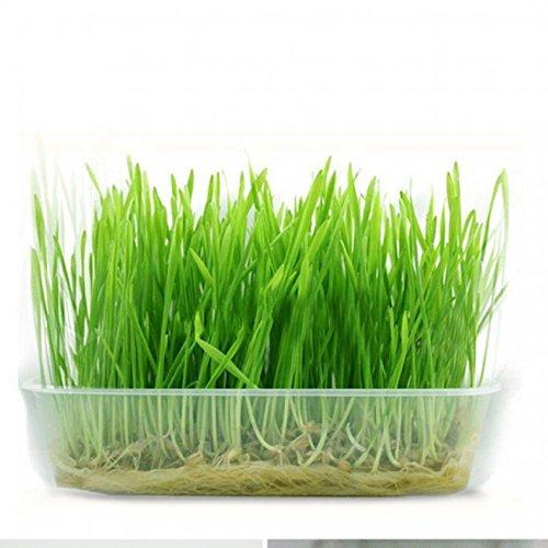 growthci-green-digestive-crystal-catnip-grass-healthy-treat-cat-plant-double-catnip-seeds
