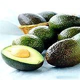Generic Semillas de aguacate genÃricas Persea Americana Mill Semillas de pera DIY Healthy Fruit Salad-10Pcs / Pack
