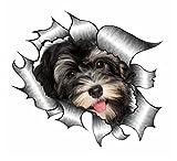 Sticar-it Ltd ZERRISSENES METALL Auto-aufkleber süß Havaneser Welpe Hund design Vinyl decal - Multi, Large 205x160mm approx