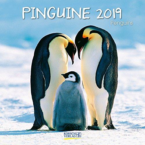 hürenkalender mit Ferienterminen. Lustige Bilder der Eis-vögel. 30 x 30 cm (Eis Angeln Kalender)