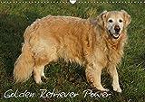 Golden Retriever Power (Wandkalender 2019 DIN A3 quer): Ein besonderer Hundekalender (Monatskalender, 14 Seiten ) (CALVENDO Tiere)