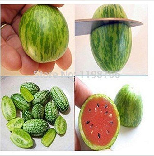 20pcs Gemüse und Fruchtsamen Mini Wassermelone Samen schmecken wie Gurken Bonsai Pflanzen Samen für Heim & Garten (Wassermelonen-gurken Samen)