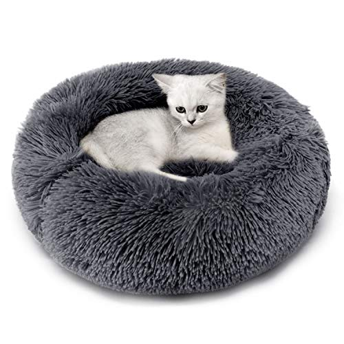 Cucce per gatti, per stare al caldo in casa le migliori