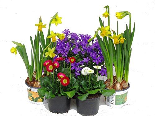 Shopping - Ratgeber 51ARRPpi8eL Frühlingsdeko - Zeigen Sie Freude am Frühling