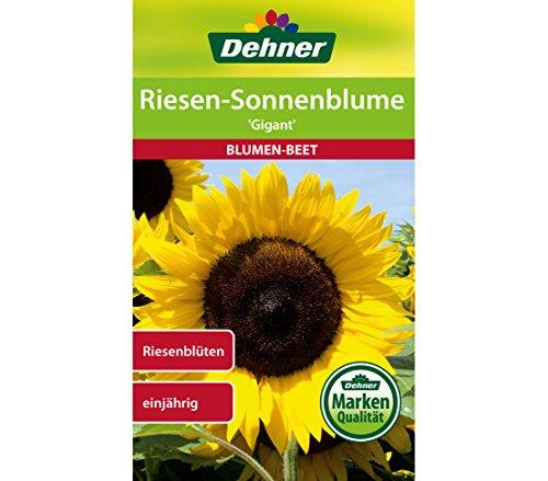 """Dehner Blumen-Saatgut, Riesen Sonnenblume \""""Gigant\"""", 5er pack (5 x 4 g)"""