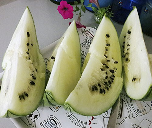 Bobby-Seeds Melonensamen Cream of Saskatchewan Wassermelone Portion