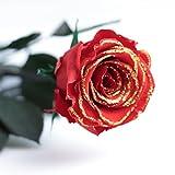 ROSEMARIE SCHULZ 1 Ewige Rose Goldglimmer, haltbar 3 Jahre konservierte rote Rose Gold die eine Ewigkeit blüht Valentinstag spezial