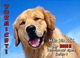 INDIGOS UG - Türschild FunSchild - SE508 DIN A4 ACHTUNG Hund Golden Retriever - für Käfig, Zwinger, Haustier, Tür, Tier, Aquarium - aus hochwertigem Alu-Dibond beschriftet sehr stabil