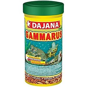 DAJANA Gammarus, 6er Pack (6 x 25 g)