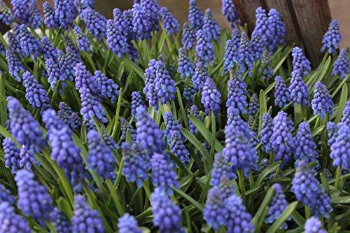Blumenhandel Ullrich