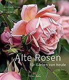 Alte Rosen für Gärten von heute
